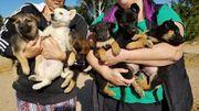 6 Hundewelpen suchen ein Zuhause