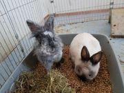 2 Kaninchenweibchen in Liebevolle Hände