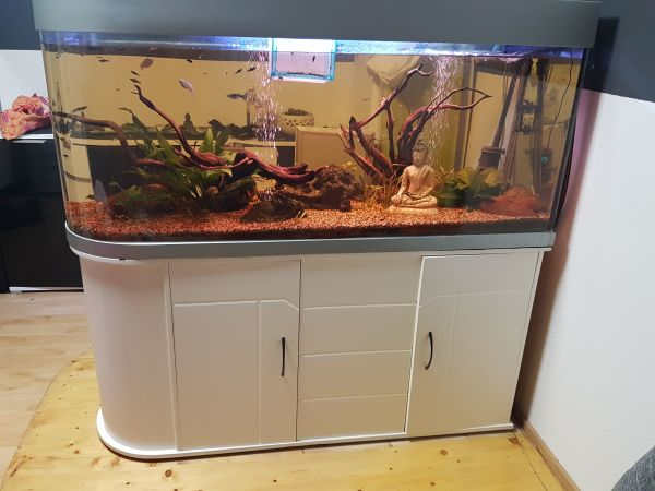 aquarium 450 liter als raumteiler blickfang in pforzheim fische aquaristik kaufen und. Black Bedroom Furniture Sets. Home Design Ideas