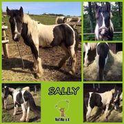 Sally - kleiner Rohdiamant :