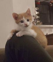 Boris der kleine