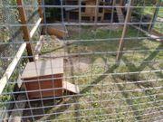 Rhd2 Kontakt-Kaninchen