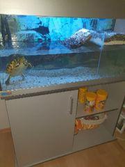 Aquarium mit Wasserschildkröte