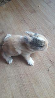 7 zuckersüße Kaninchenbabys
