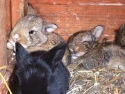 Kaninchenkinder suchen ein Zuhause