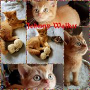 Red-tabby Ticket