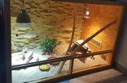 Zwergbartagame inklusive Terrarium