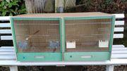 Vogel Zuchtbox der Firma Graf