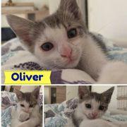Oliver (Kater aus