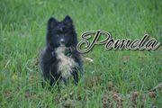 Pomela wünscht sich in ihrer