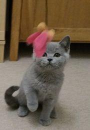 Liebevolle Tierbetreuung Katzensitting in familiärer