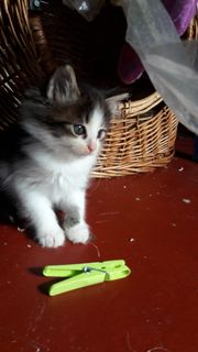 Süsse kleine katzenbabys