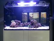 Aqua Medic Xenia 100 Meerwasseraquarium