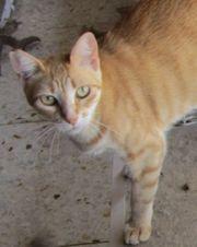 Rina - zuckersüßes Katzenmädchen wartet auf