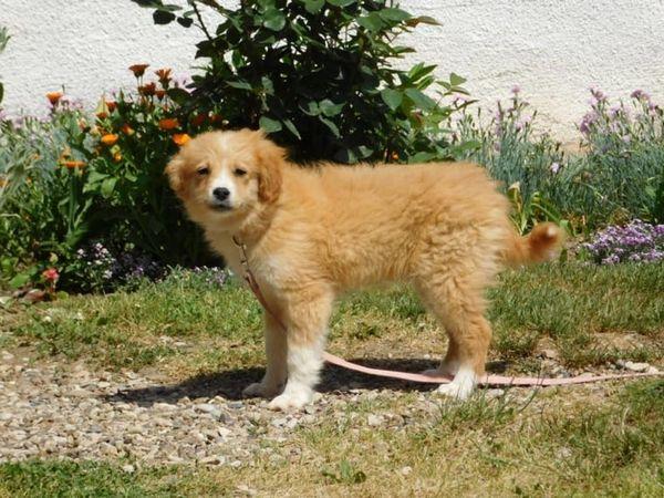 Kuschel Teo sucht » Hunde