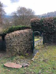Hirschhorn Waldgrundstück mit Wohnhütte