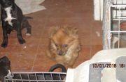 Jessy: Hübsches Hundemädchen