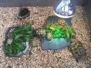 Griechische Landschildkröten, Schildkröten