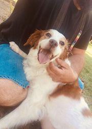 Lola - eine liebe blinde Hundeseniorin