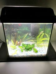 Beginner Aquarium mit LED