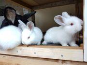 Kaninchen bereit zum
