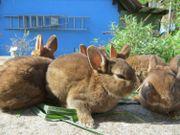 Kleine Kaninchen in