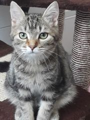 Unser bildhübsches Katzenmädchen Screw sucht
