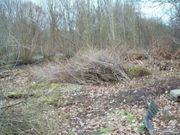 Gartenschnitt Holz Eiche