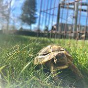 Biete Schildkröten ein artgerechtes zu