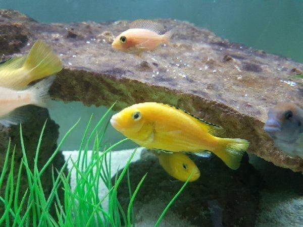 aquarium fische züchten
