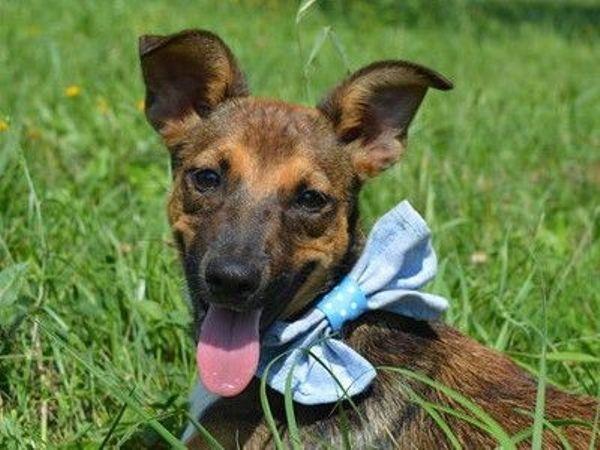 ELISKA - gehorsam und » Hunde