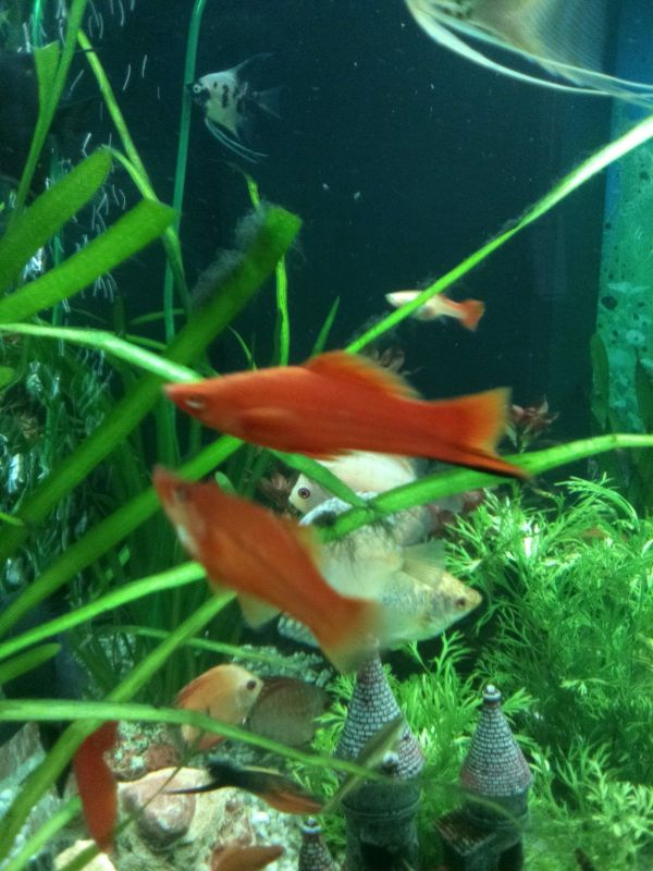 Aquaristik in bremen bei deinetierwelt for Kleine zierfische