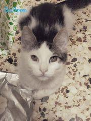 Tierschutz Katzen suchen ein Zuhause