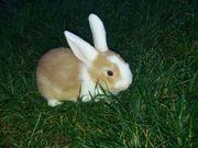 Süße Kaninchen