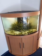 Komplet Aquarium Selbstabholer