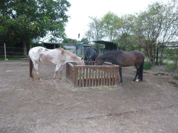 boxen offenstall weidepl tze pferde in freimersheim pfalz bei deinetierwelt. Black Bedroom Furniture Sets. Home Design Ideas