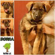 Dorka - unser kleines