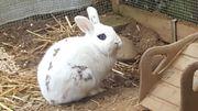 Zuckersüßer Bube Kaninchen