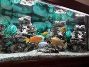Juwel-Aquarium 300l OHNE FISCHE