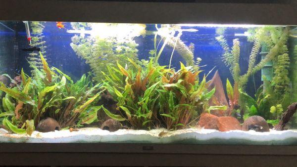 aquaristik in langenhagen hannover bei deinetierwelt. Black Bedroom Furniture Sets. Home Design Ideas