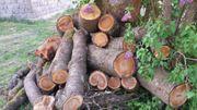 Kirschbaum Stamm Drechselholz Bastelholz Stammholz