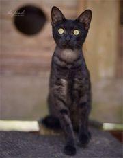 Savannah Katzen
