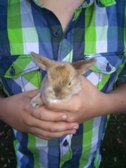 Wunderschöne Kaninchen Babys