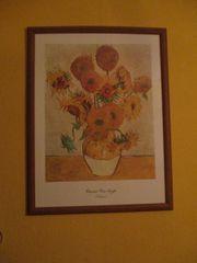 Bild,Sonnenblume von