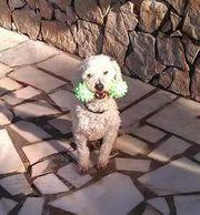 Sonnenschein Dudley wartet