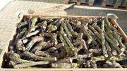 Brennholz Rebknorzen Gesägt ab 40euro