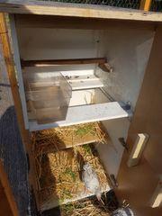 Volier käfig Tierkäfig Vogelkäfig hühnerstall