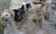 5 süsse Mischlingshunde